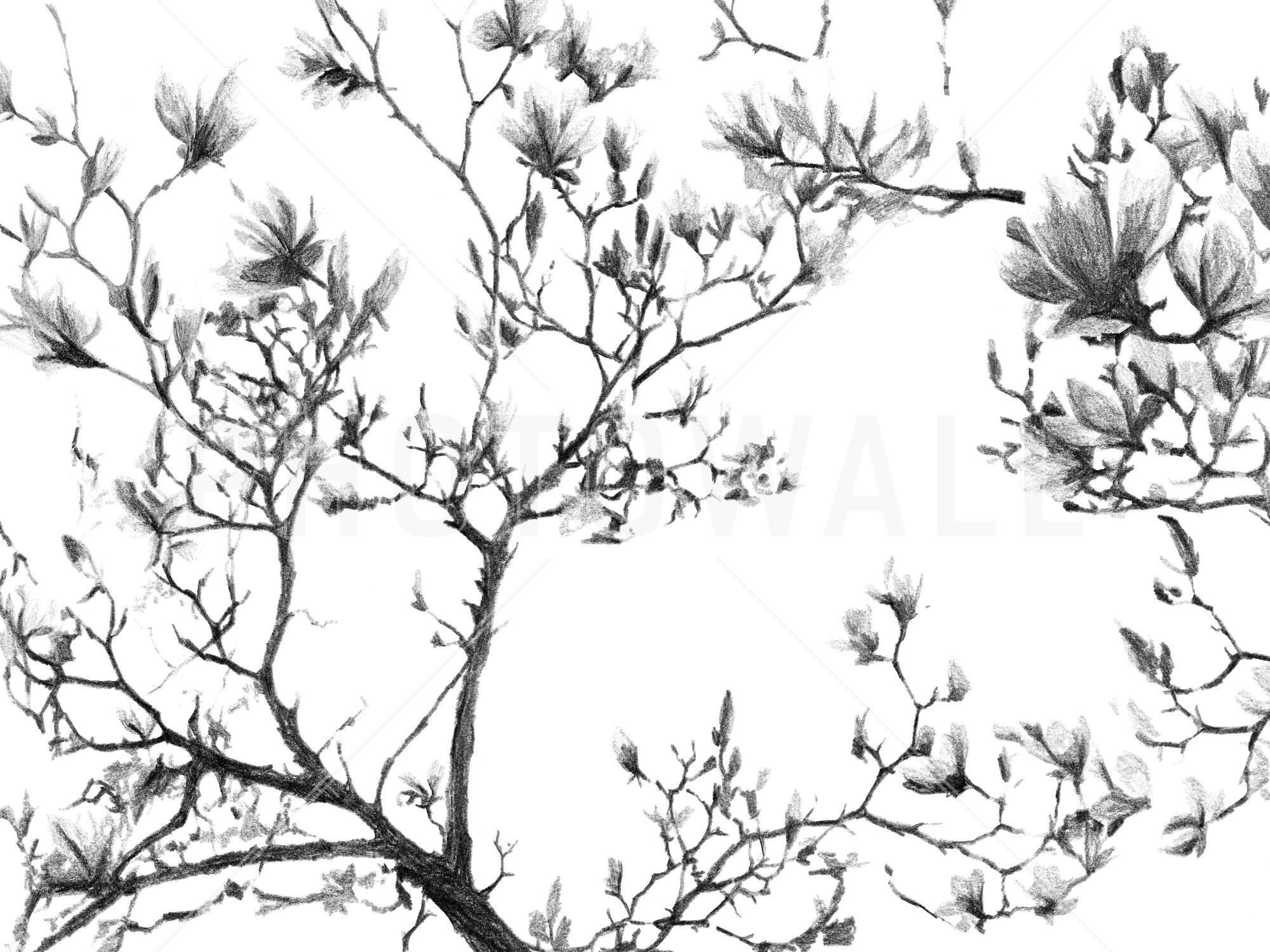 2000x1500 Magnolia Sketch