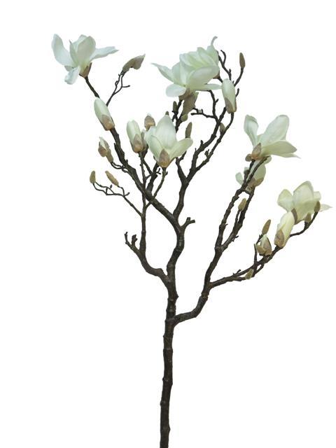 480x640 Magnolias Shop