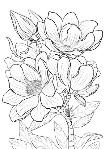 340x480 Campbells Magnolia Coloring Page Colouring Pages