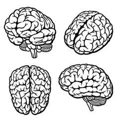 236x247 Brain Drawing Front View Diagram Brain, Drawings