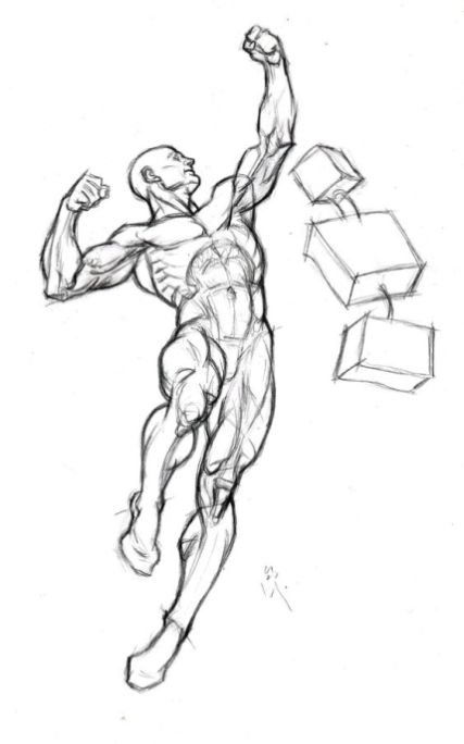427x684 Character Design Collection Male Anatomy Anatomia