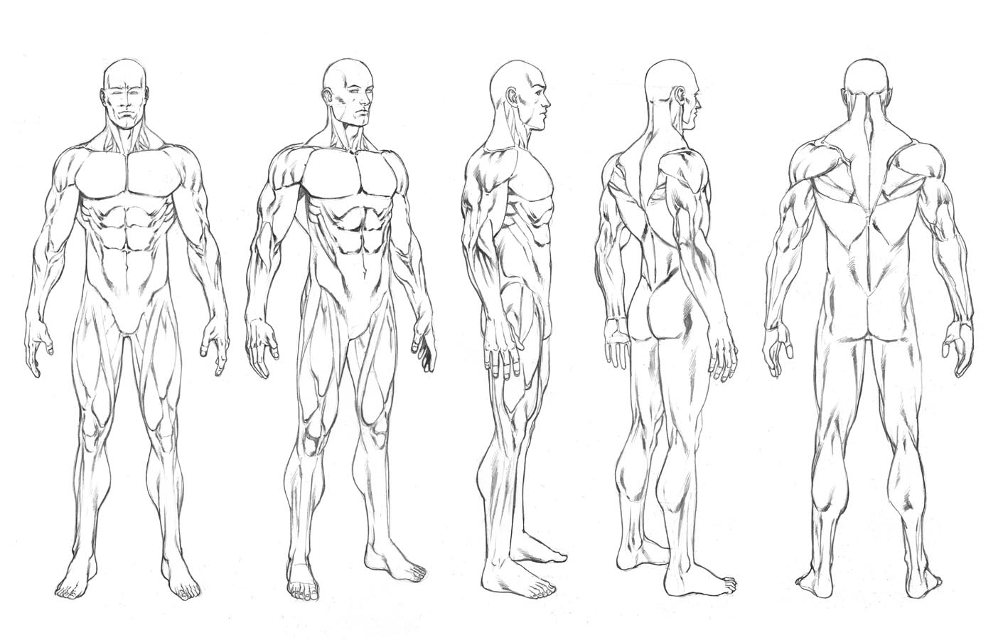 Male Body Outline Drawing At Getdrawings Com Free For