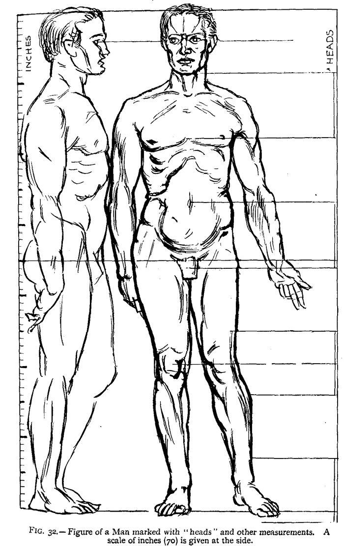 700x1111 91 Best Anatomie