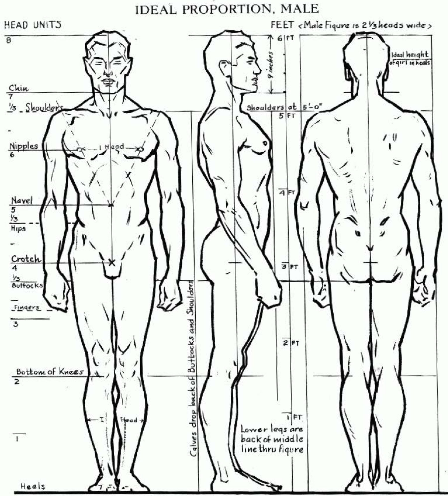 1800x1992 Proportions Of The Human Figure How To Draw The Male Figure