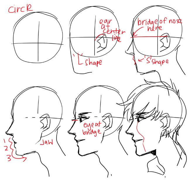 656x652 Drawing How To Draw A Male Lion Face With How To Draw A Male