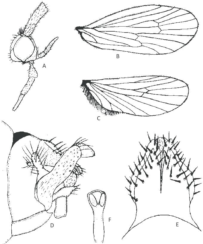 680x818 Lepidostoma Nuburagangai Sp. Nov. (Male). A Head, Scape And Mouth