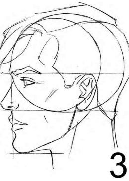 260x364 Male Face Proportions Anatomy Reference Face