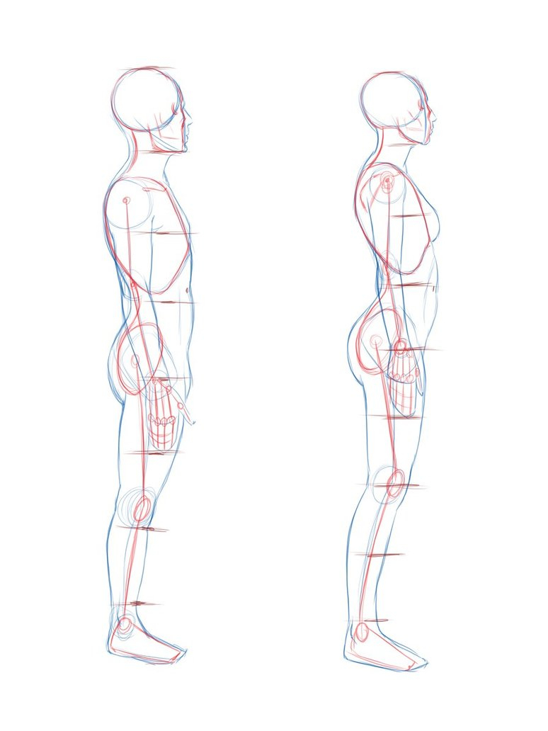 774x1032 Photos How To Draw Side Profile Body Male,