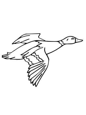 360x480 Flying Mallard Drake Coloring Page Free Printable Coloring Pages
