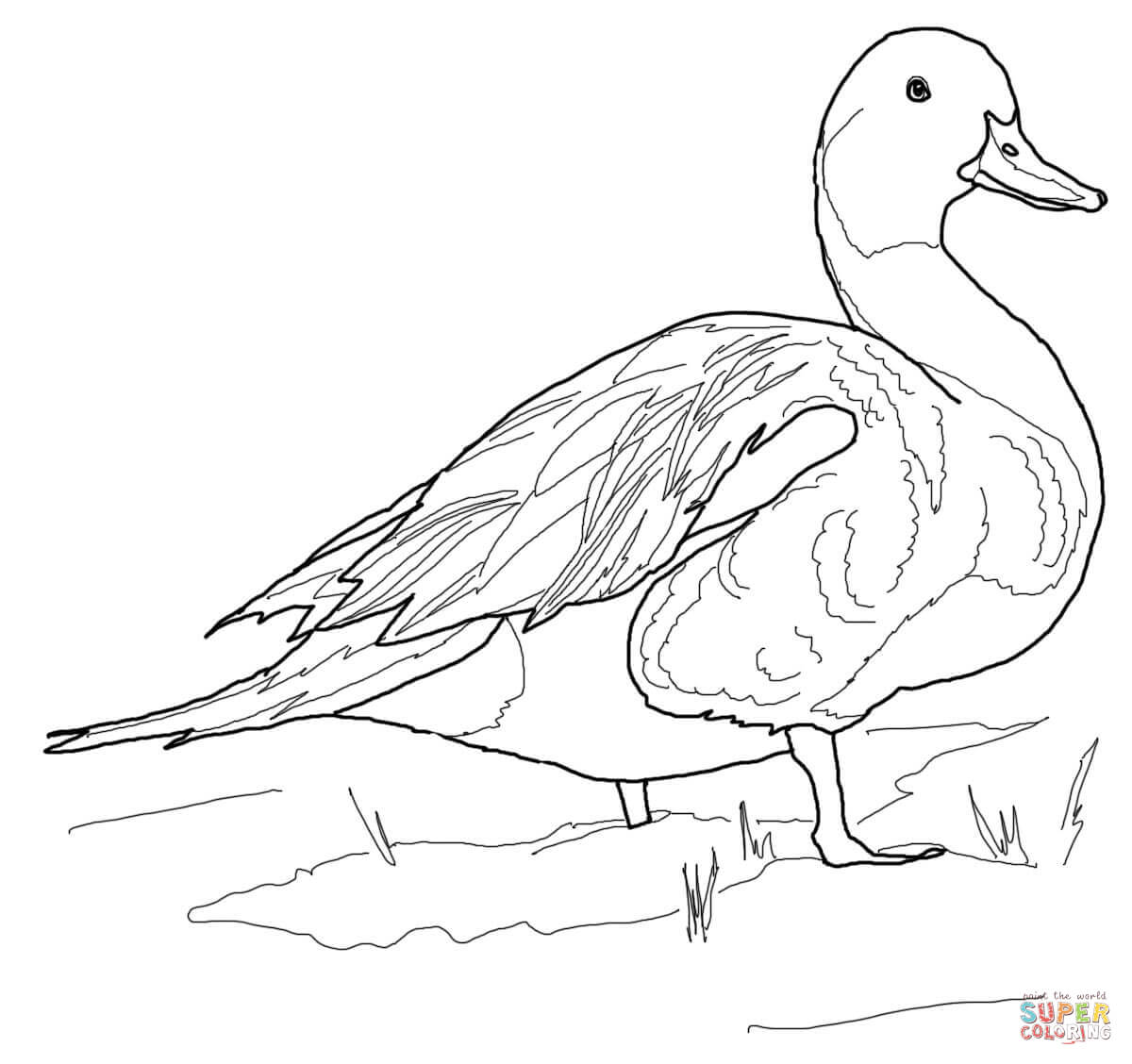 1200x1128 Mallard Coloring Pages