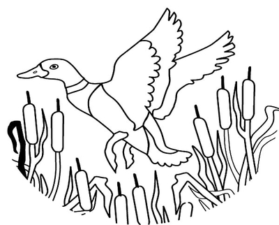 400x322 Mallard Duck Coloring Pages How To Draw Flying
