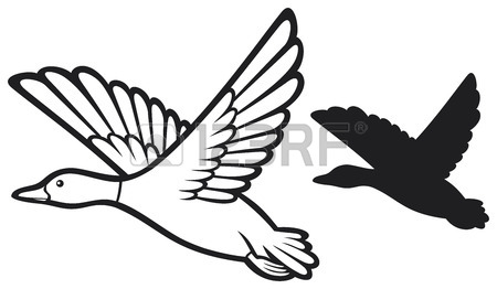 450x262 Mallard Duck Flying Bird Duck, Flying Duck Royalty Free Cliparts