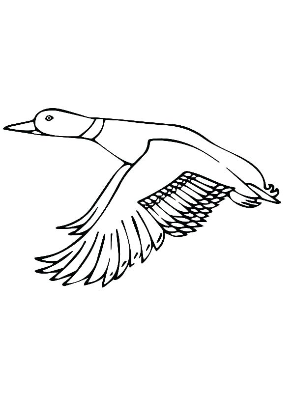 600x800 Coloring Page Of A Duck Mallard Duck Outline Coloring Pages Free