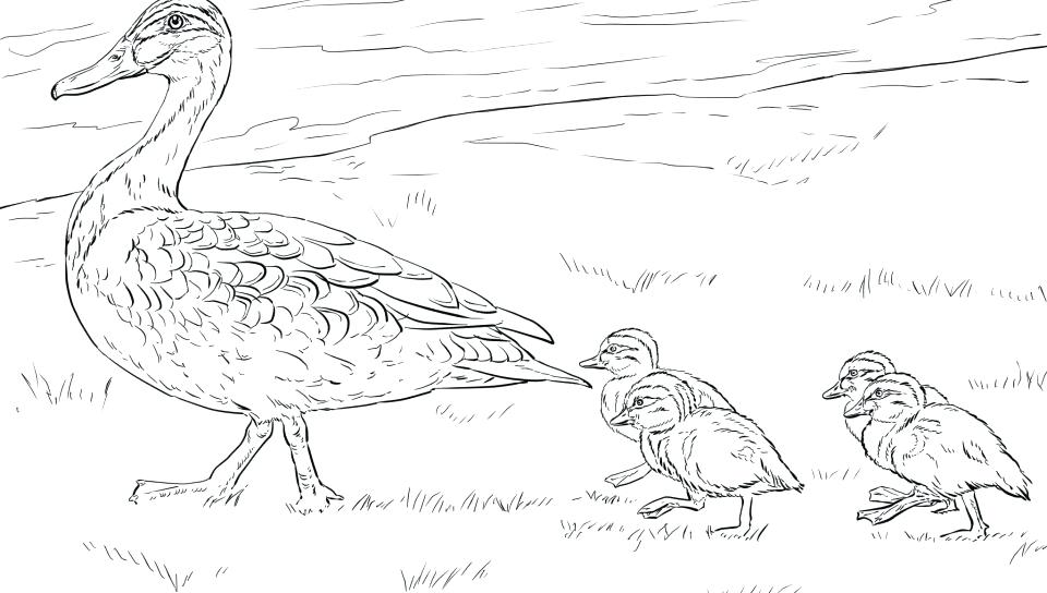960x544 Coloring Pages Of Ducks Coloring Page Duck Pages Ducks Mallard