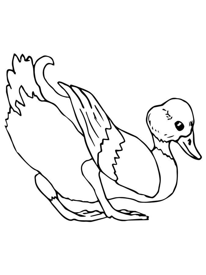 675x900 Coloring Pages Mallard, Printable For Kids Amp Adults, Free