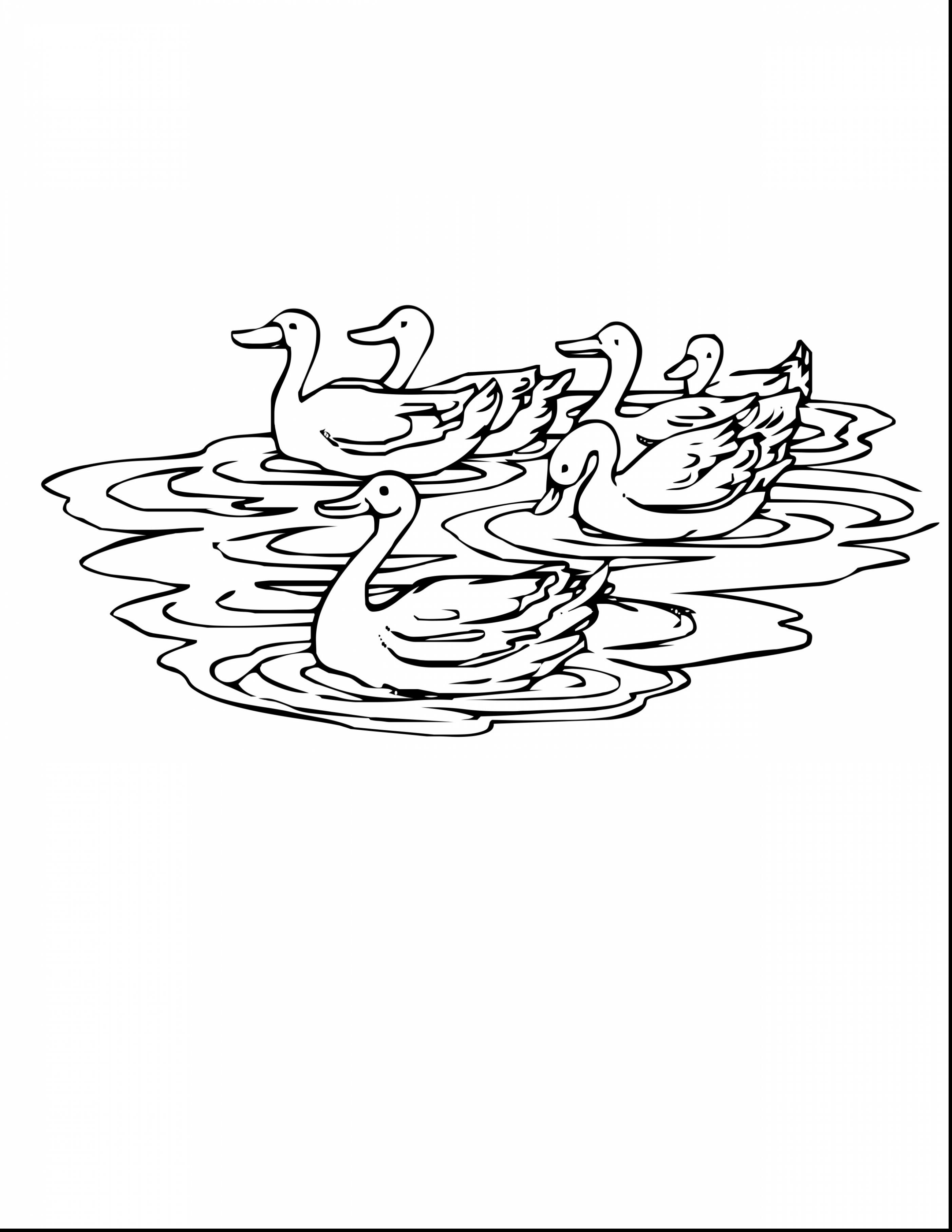 2805x3630 Impressive Duck Drawing With Duck Coloring Page