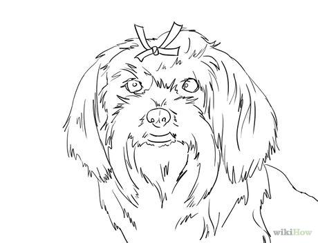 460x352 Draw A Cute Maltese Dog Face Maltese, Face And Dog