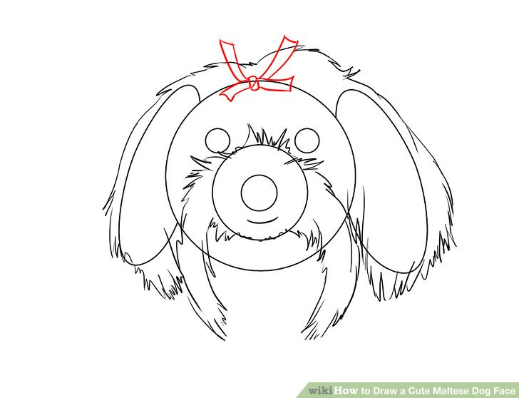 Maltese Dog Drawing At Getdrawings Com Free For Personal Use