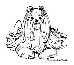 240x210 Maltese Dog A Drawing Done A Fundraiser Tshirt