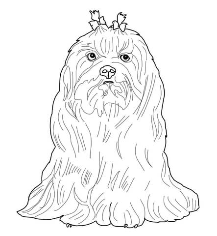 443x480 Maltese Dog Coloring Page Free Printable Coloring Pages