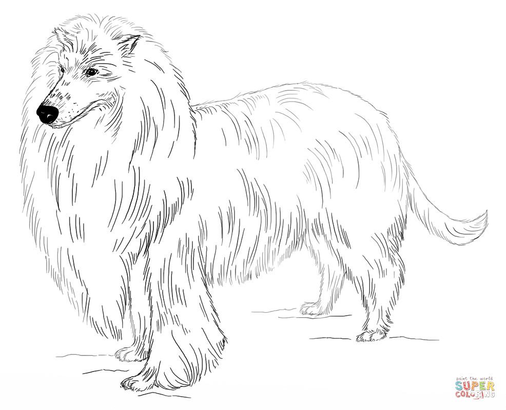 986x800 Short Hair Maltese Dog Coloring Page Free Printable Coloring Pages