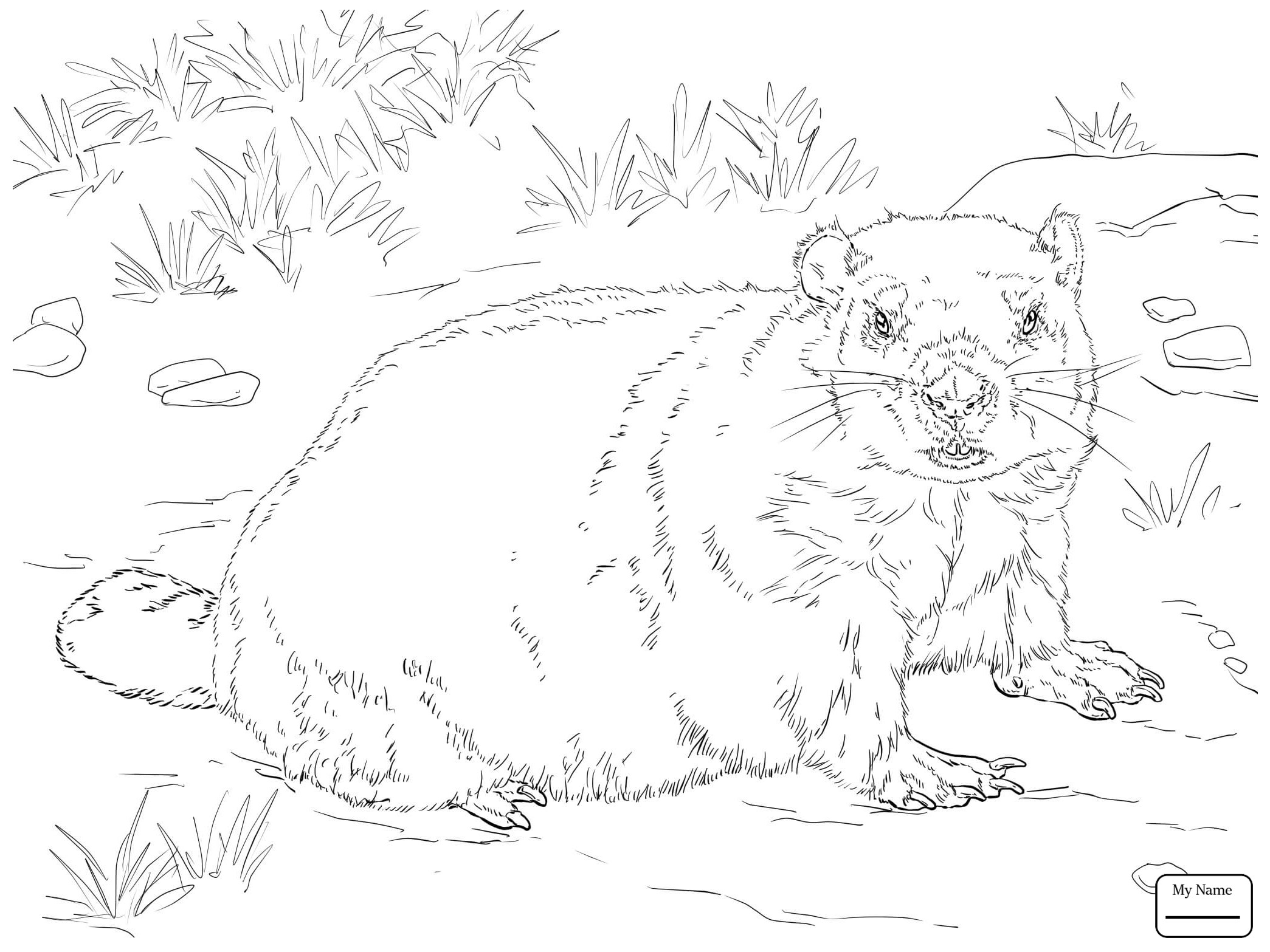 2089x1567 Groundhog Day Coloring Pages For Kids New Mammals Realistic