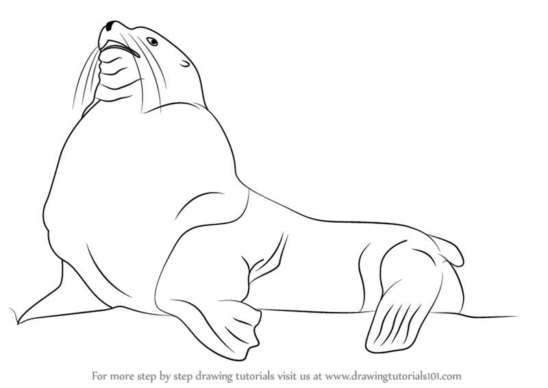800x566 Learn How To Draw A Steller Sea Lion (Aquatic Mammals) Step By