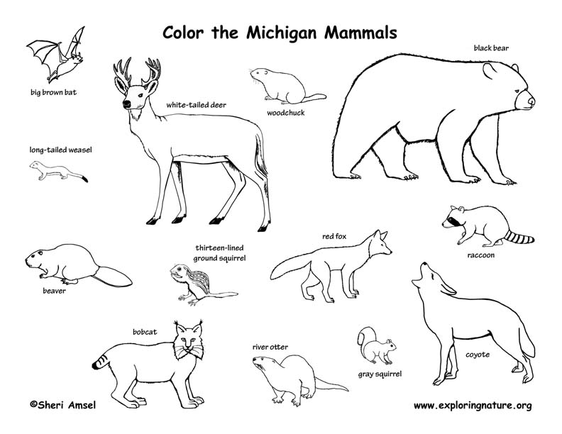 792x612 Mammal Drawing