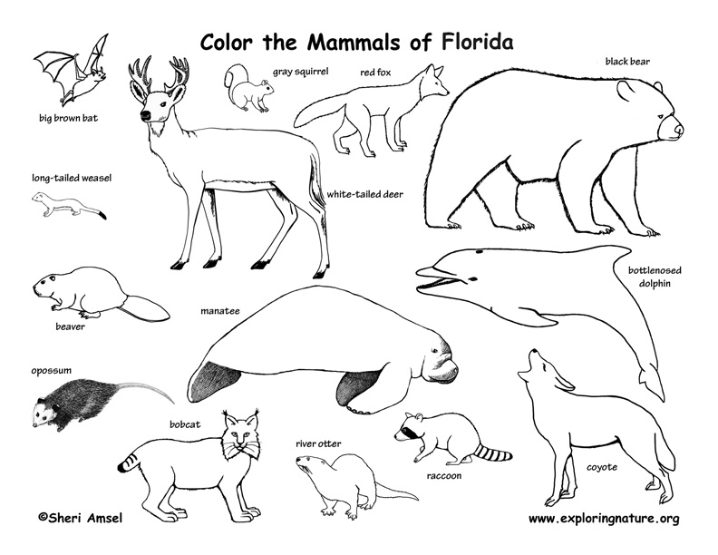 792x612 Mammals Coloring Pages