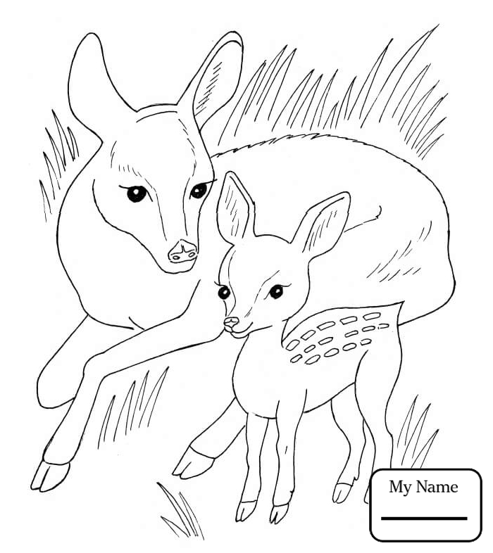 700x786 Roe Deers Mammals Coloring Pages For Kids