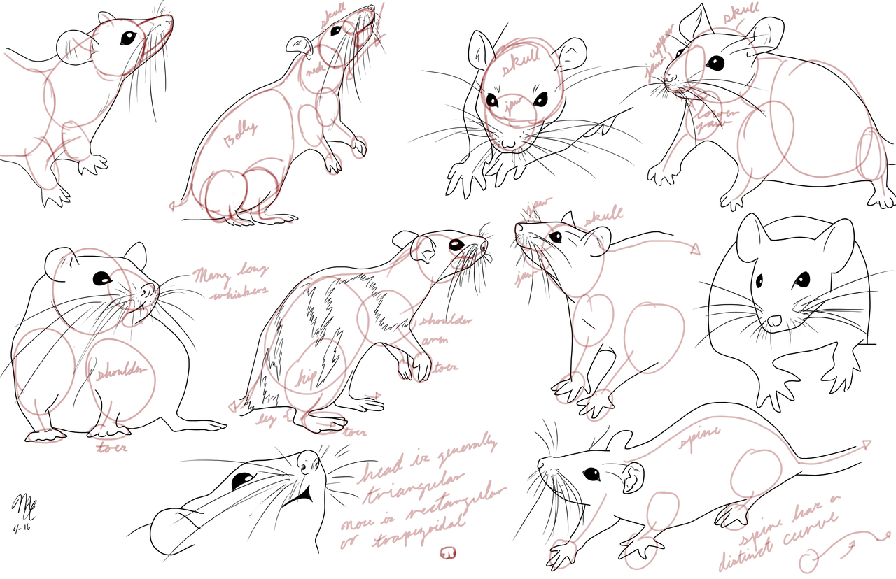 1280x828 Tutorial Animals Misc Mammals On Drawing Tutorial