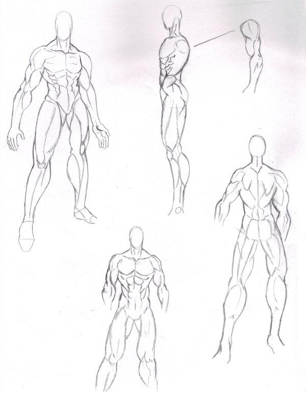 600x770 Manga Male Body Structure By Tiffawolf On Anatomy