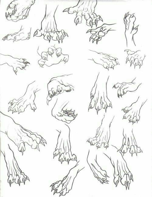 500x647 Animal Paws, Claws How To Draw Mangaanime How To Draw Manga