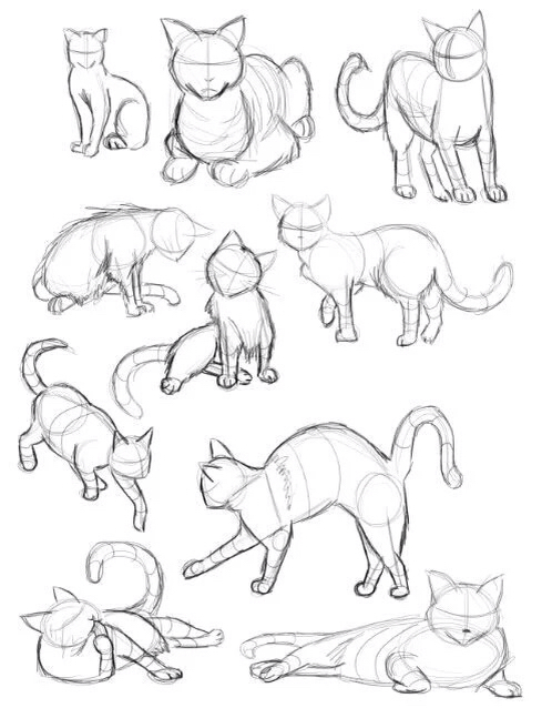 489x638 How To Draw A Cat