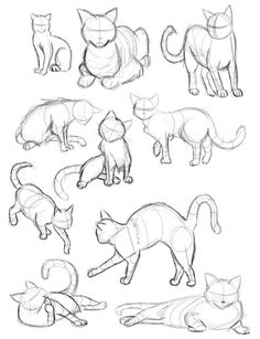 236x307 Cat Gestures By ~saraneth672 On Find More