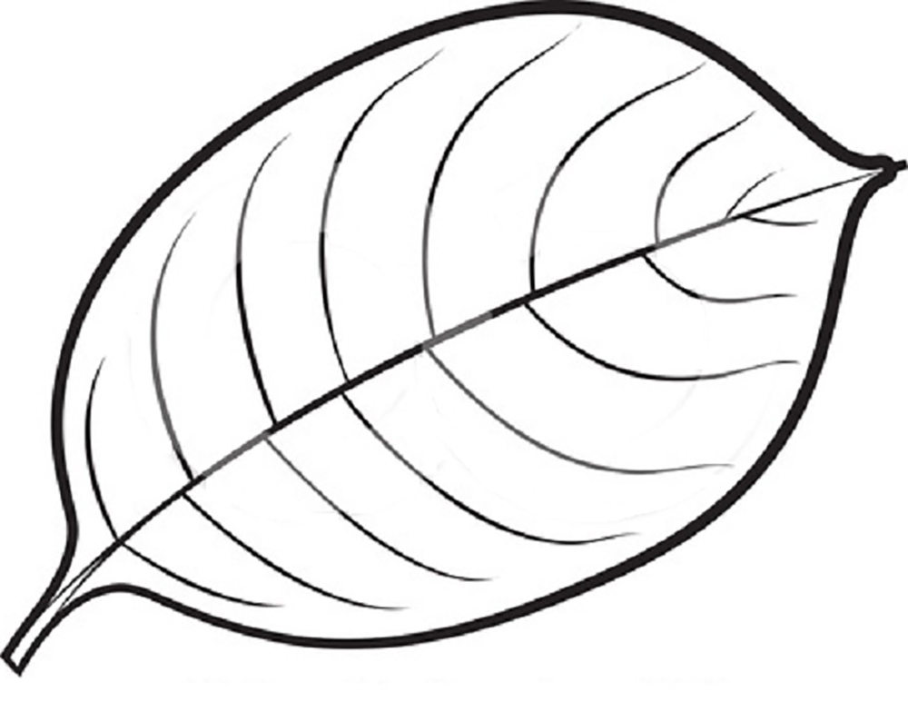 1000x783 Mango Leaves Leaves Coloring Pages Kids Net And Leaves