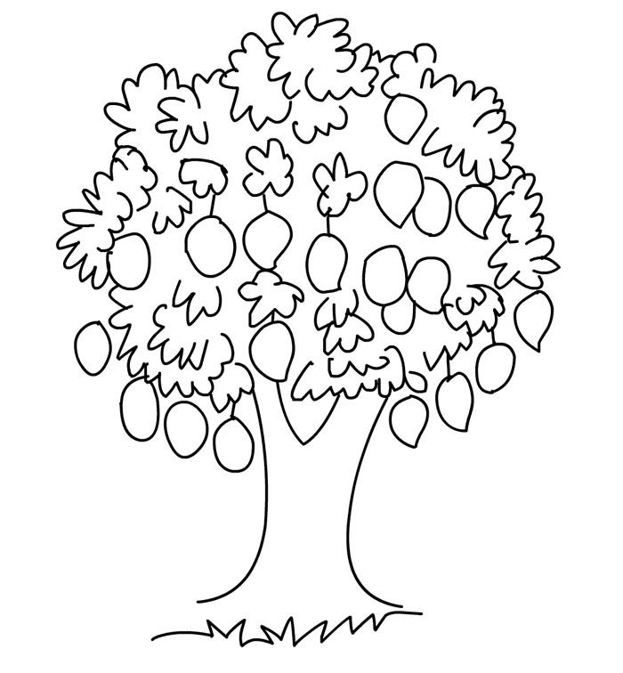 700x756 Colorings Mango Tree Coloring