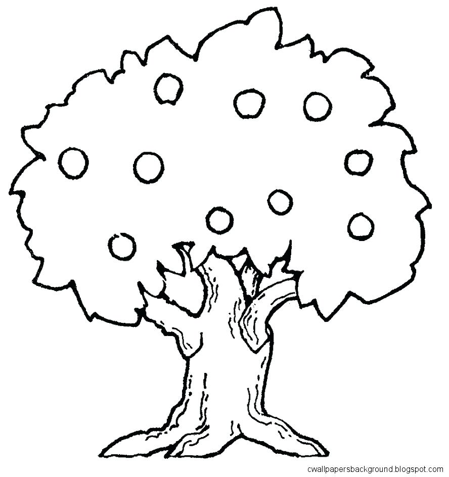 888x944 Bare Tree Vector Outline Trees Derby Of For Colouring Pine Outline