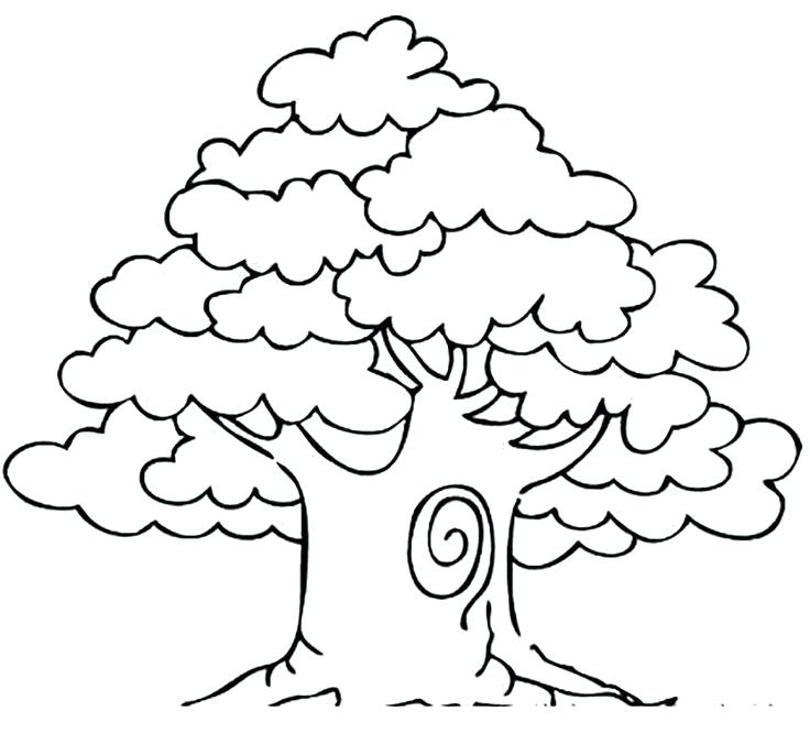736x666 Coloring Pages Of Trees Awesome Drawing Oak Tree Coloring Page
