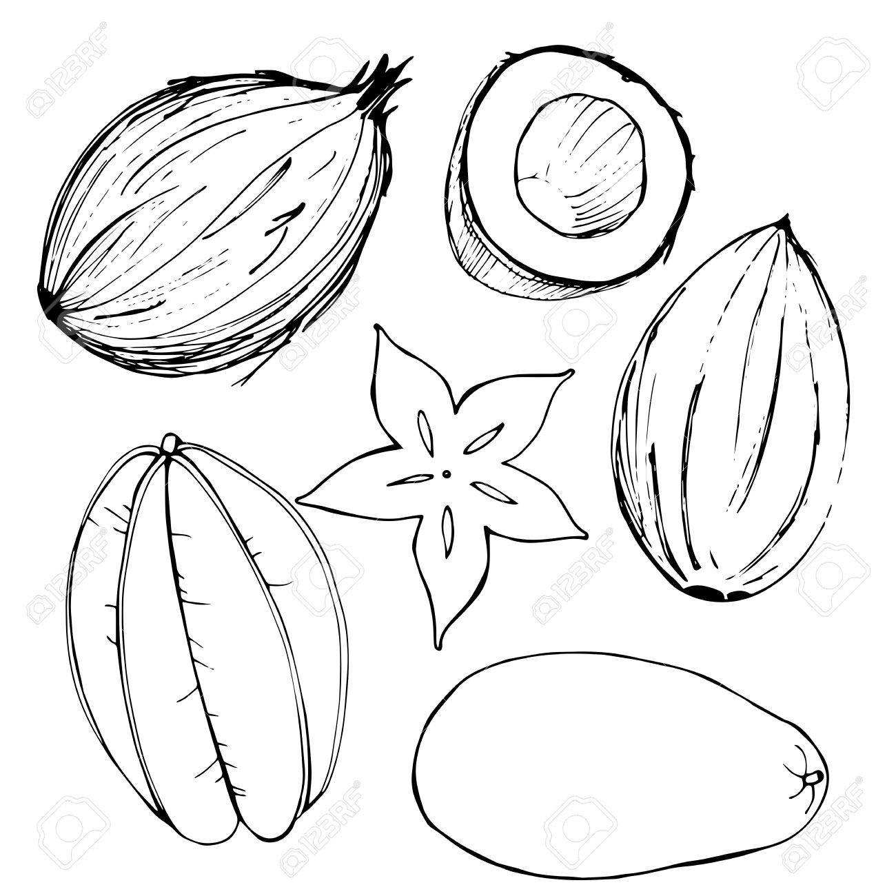 1300x1300 Hand Drawn Fruits. Coconut, Mango, Carambola. Vector Illustration