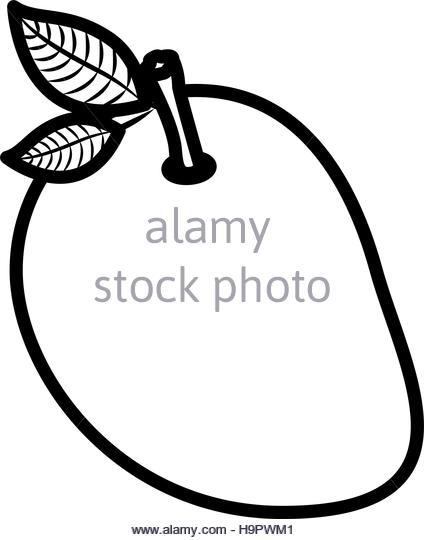424x540 Mango Black And White Stock Photos Amp Images