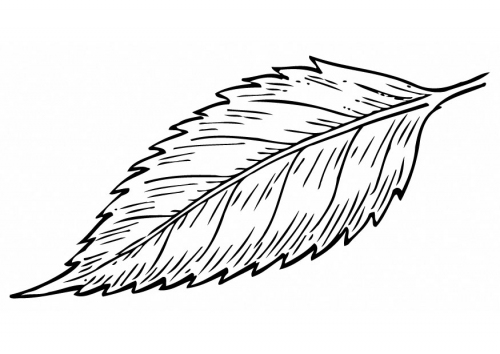 500x354 Mango Leaf Line Drawing
