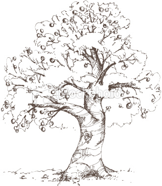 330x380 Hand Drawn Apple Tree Drawn In Loose, Sketchy Style. Xl Jpg