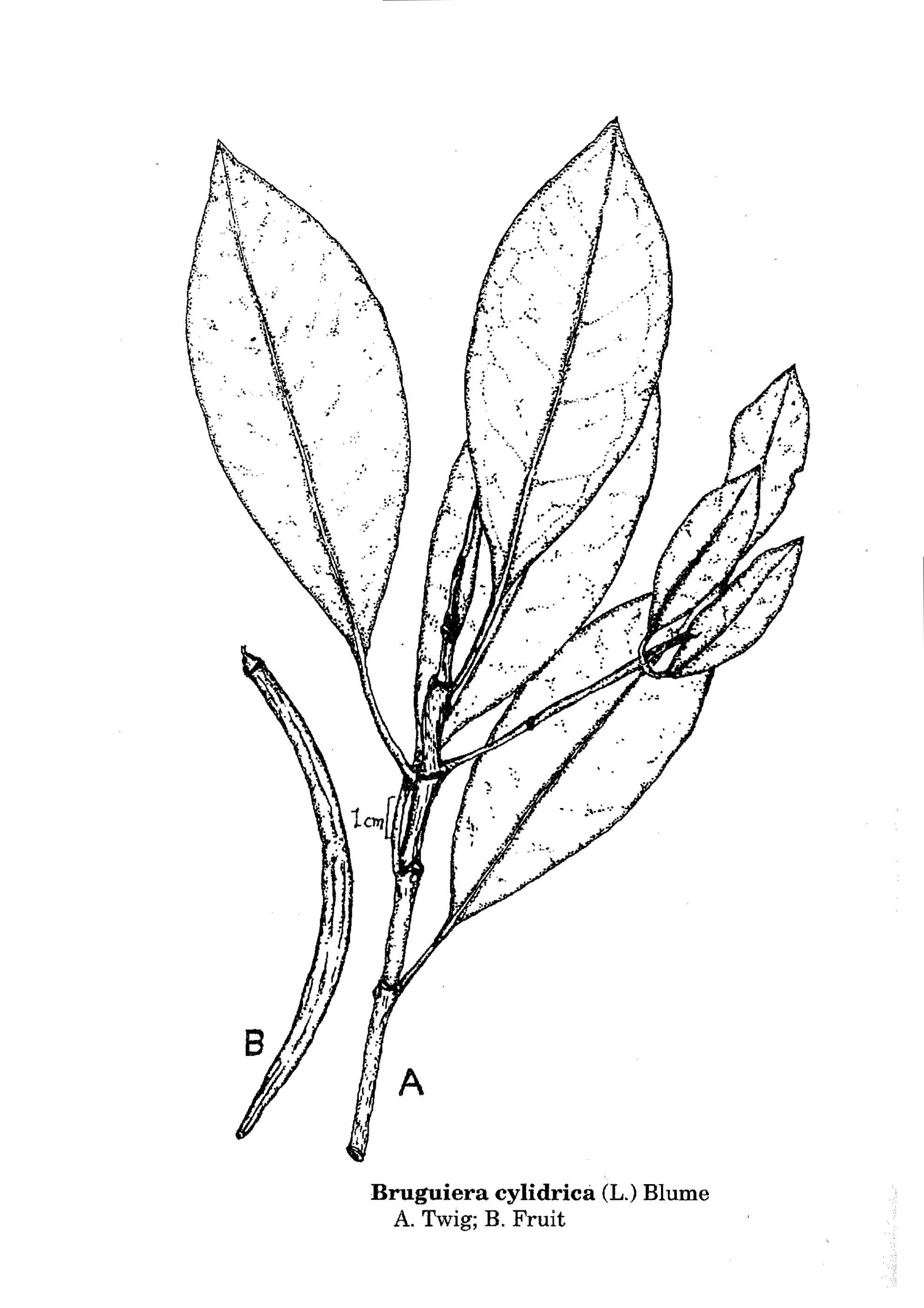 1985x2810 Herbarium Jcb