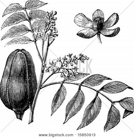 450x464 Mangrove Images, Illustrations, Vectors