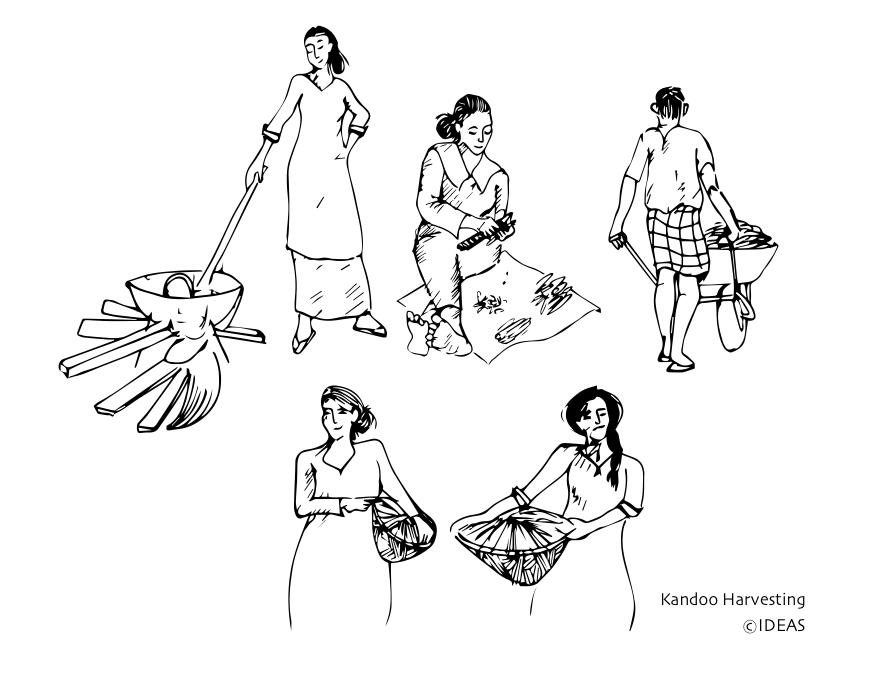 874x673 Of Famine And Food Security A Story From Kelaa's Kandoofaa