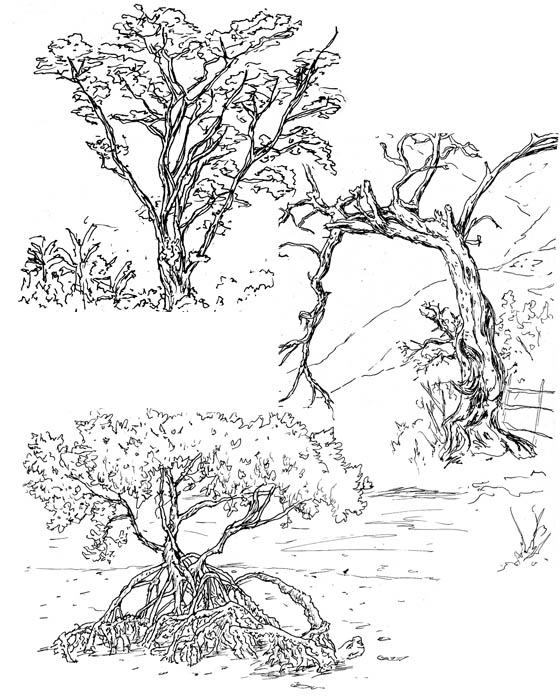 560x700 Reanimate African Trees