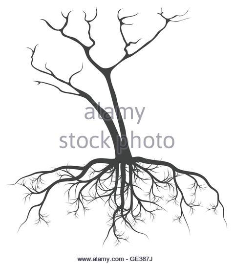 479x540 Black Tree Silhouette Illustration Roots Stock Photos Amp Black Tree