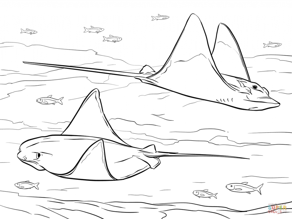 1024x768 Ray Coloring Pages Free Coloring Pages With Manta Ray Coloring