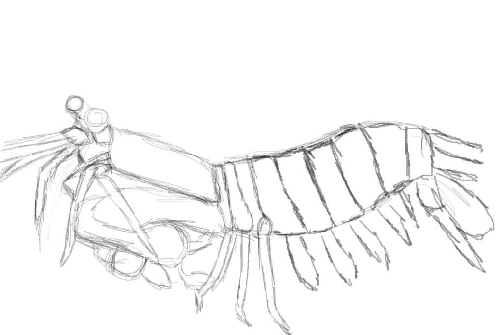 1024x683 Mantis Shrimp By Noktpapilio